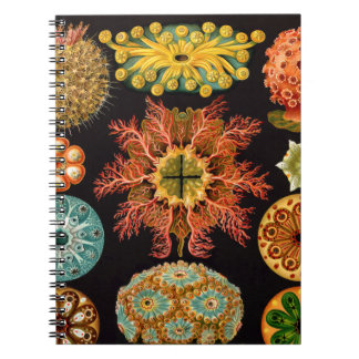 Sea Squirt Square Notebook