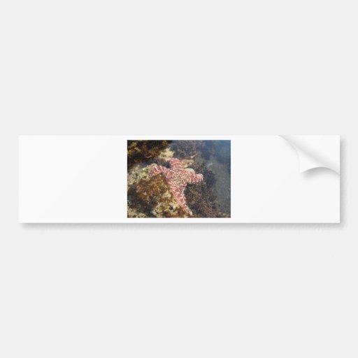 sea star bumper sticker