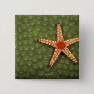 Sea star cleaning reefs by eating algae 15 cm square badge