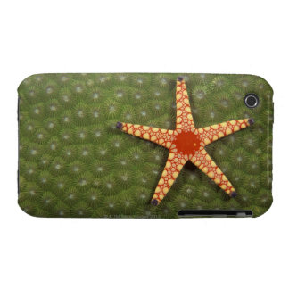 Sea star cleaning reefs by eating algae Case-Mate iPhone 3 case