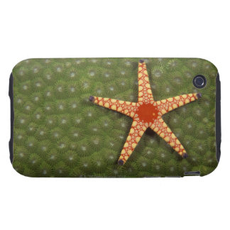 Sea star cleaning reefs by eating algae tough iPhone 3 cases