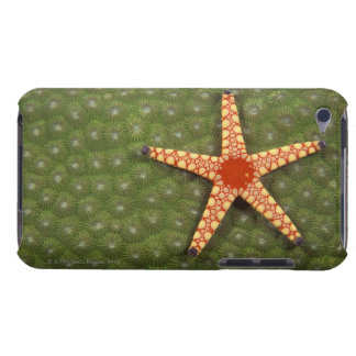Sea star cleaning reefs by eating algae iPod Case-Mate cases