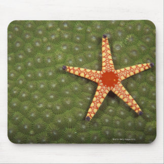 Sea star cleaning reefs by eating algae mouse mat