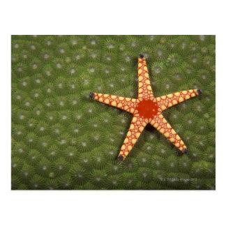 Sea star cleaning reefs by eating algae postcard