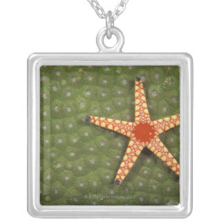 Sea star cleaning reefs by eating algae silver plated necklace