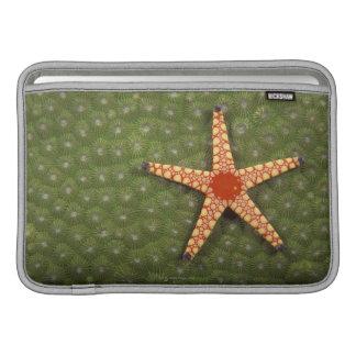 Sea star cleaning reefs by eating algae sleeve for MacBook air