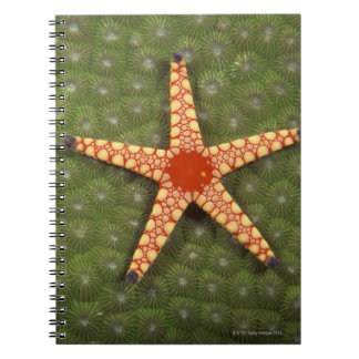 Sea star cleaning reefs by eating algae spiral note books