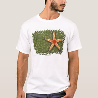 Sea star cleaning reefs by eating algae T-Shirt