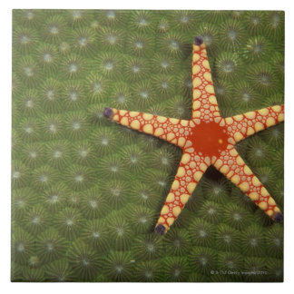 Sea star cleaning reefs by eating algae tile