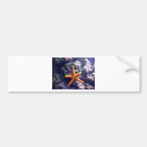 Sea Star In Aquarium Bumper Stickers