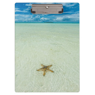 Sea star in shallow water, Palau Clipboard