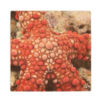 sea star, Scuba Diving at Tukang Besi/Wakatobi Maple Wood Coaster