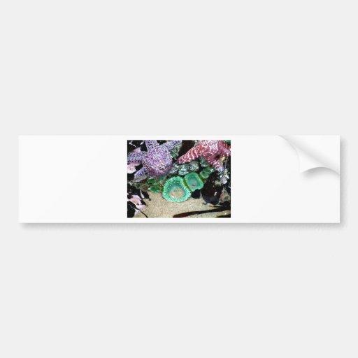 Sea Stars Anemones Bumper Stickers