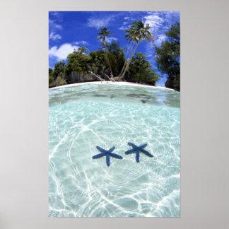 Sea stars, Rock Islands, Palau 2 Poster