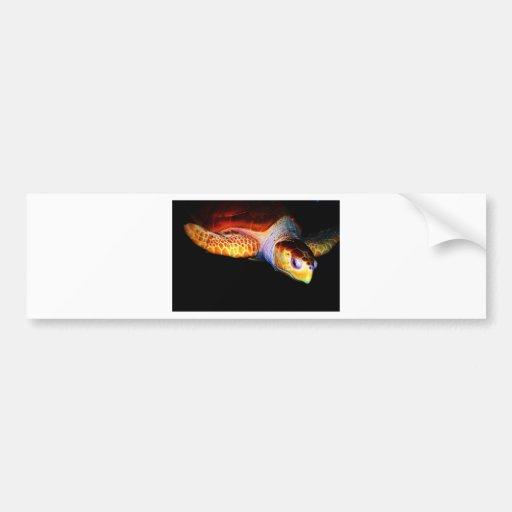 Sea Turtle 1 Bumper Stickers