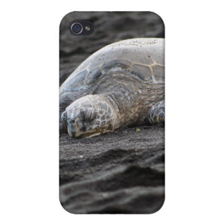 Sea Turtle 4S  Covers For iPhone 4