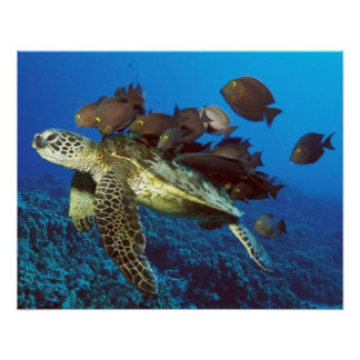 Sea Turtle and Fish Print