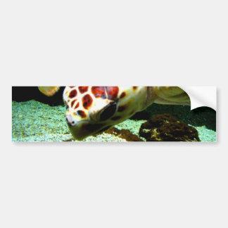 Sea Turtle Bumper Sticker Car Bumper Sticker