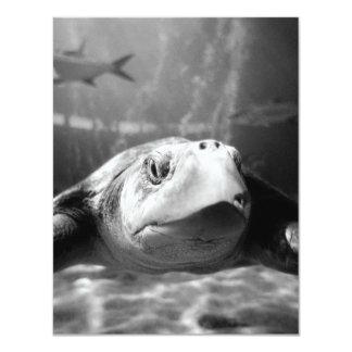 Sea Turtle Closeup 11 Cm X 14 Cm Invitation Card