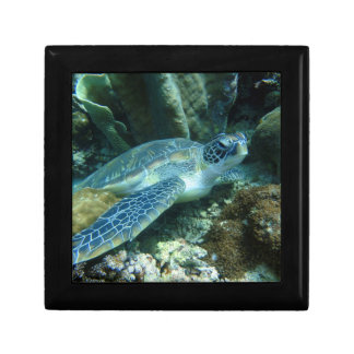 Sea Turtle Gift Box