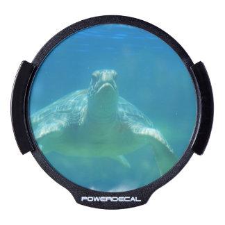 Sea Turtle LED Window Decal