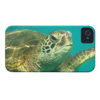 Sea Turtle iPhone case iPhone 4 Case-Mate Cases