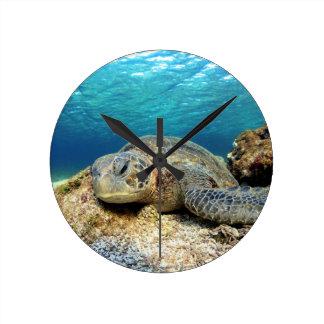 Sea turtle relaxing underwater in tropical ocean clock