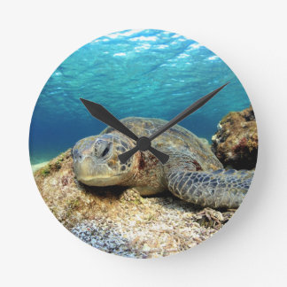 Sea turtle relaxing underwater in tropical ocean round clock