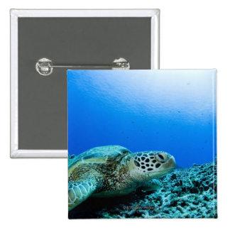 Sea turtle resting underwater 15 cm square badge