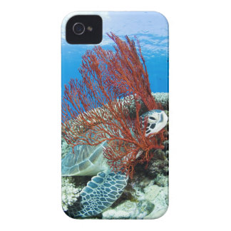 Sea turtle resting underwater 2 Case-Mate iPhone 4 cases