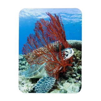 Sea turtle resting underwater 2 magnet