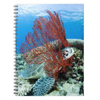 Sea turtle resting underwater 2 notebook