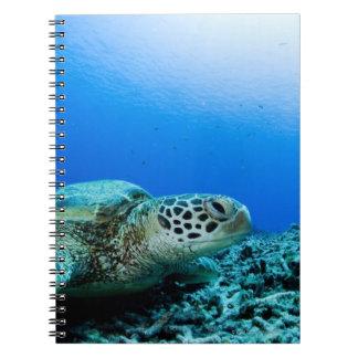 Sea turtle resting underwater notebook