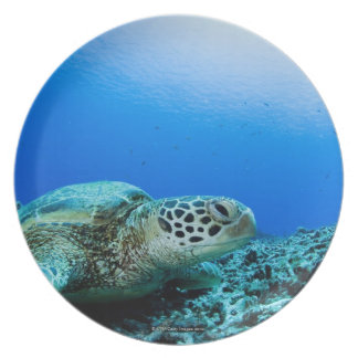Sea turtle resting underwater plate