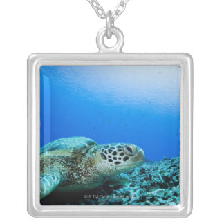 Sea turtle resting underwater silver plated necklace