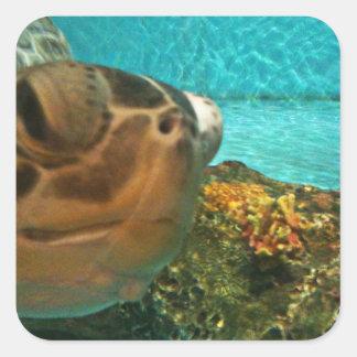Sea Turtle Surprise Square Sticker