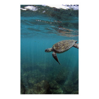 Sea turtle swimming underwater Galapagos Islands Stationery