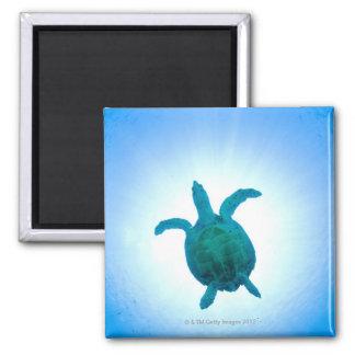 Sea turtle swimming underwater square magnet