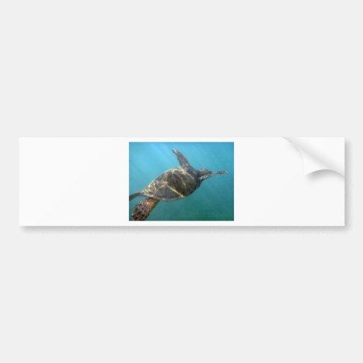 Sea Turtle swims in the water Bumper Stickers