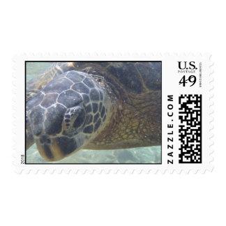 Sea Turtle underwater postage stamp
