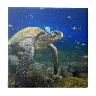 Sea turtle underwater tropical Pacific ocean Tile
