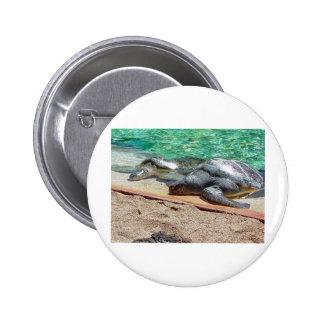 sea turtles 6 cm round badge