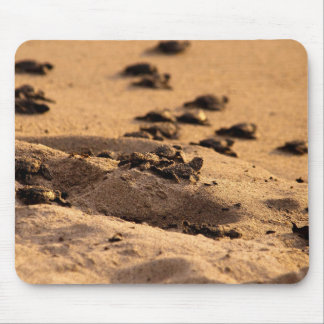 Sea Turtles Mouse Pad