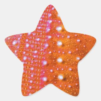 Sea Urchin-Coral Star Stickers