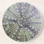 Sea Urchin Seashell Coasters