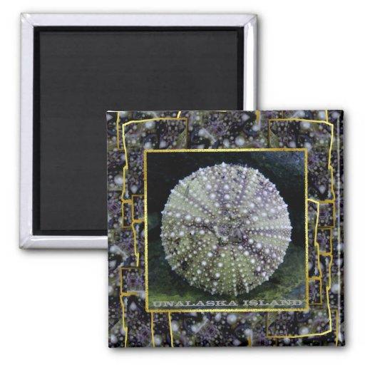 Sea Urchin Shell as Art, Unalaska Island Square Magnet