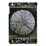Sea Urchin With Abstract Background