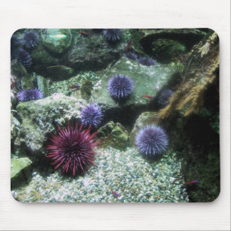 Sea Urchins Mouse Mat