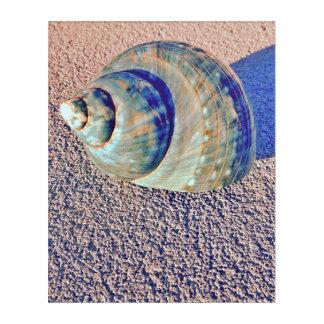 Sea Welk Seashell Acrylic Wall Art