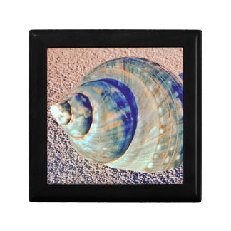 Sea Welk Seashell Small Square Gift Box